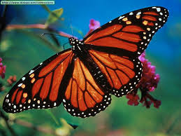 How many butterflies do you see around you?